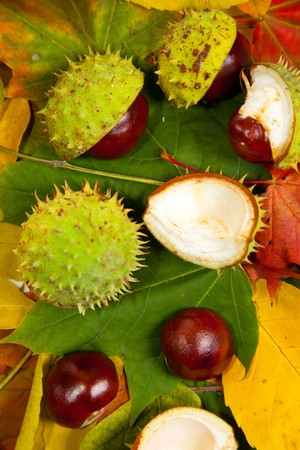 Composition of autumn chestnuts and leaves on isolated background Stock Photo - 7779907