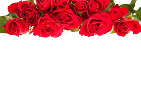 Red roses on white isolated background valentine's day Stock Photo - 8582262