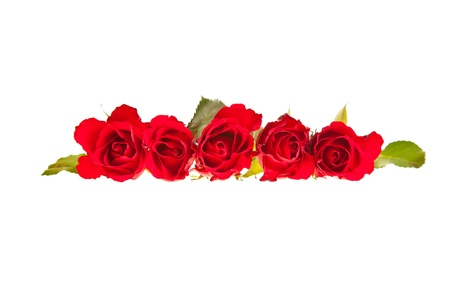 Red roses on white isolated background valentines day Stock Photo