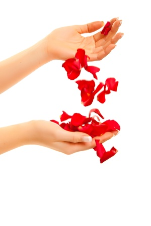 Red rose petals in womans hand isolated on white