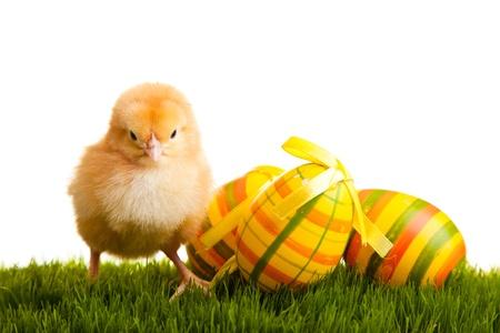 Huevos de Pascua y pollos en pasto verde sobre fondo blanco aislado Foto de archivo - 8819241