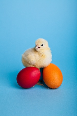 Easter eggs and chickens on blue background Stock Photo - 8819555