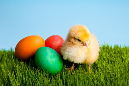Easter eggs and chickens on green grass on blue background Stock Photo - 8819556