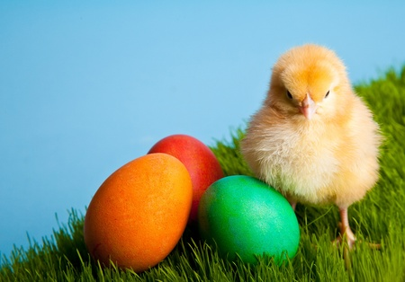 Easter eggs and chickens on green grass on blue background Stock Photo - 8819547
