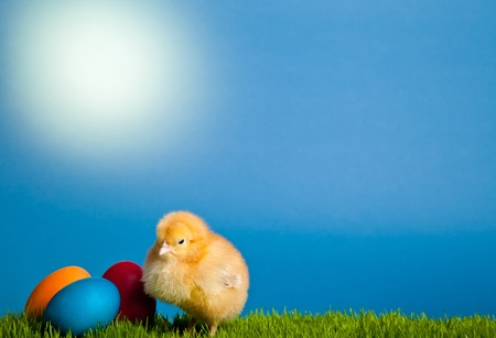 Easter eggs and chickens on green grass on blue background Stock Photo - 8819548
