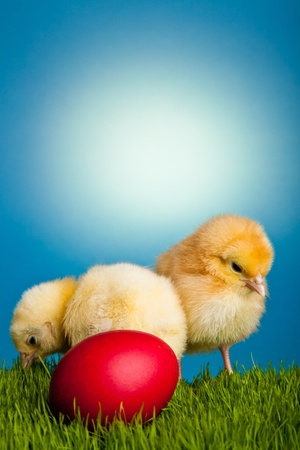 Easter eggs and chickens on green grass on blue background Stock Photo - 8819451