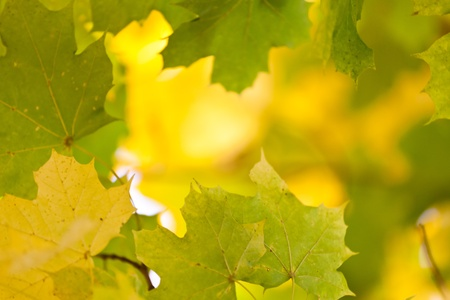Golden autumn leaves photo