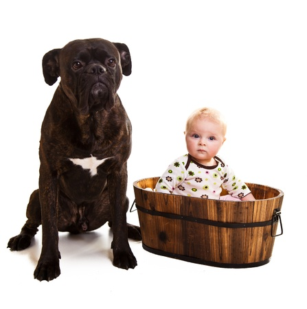 Infant with big boxer dog photo