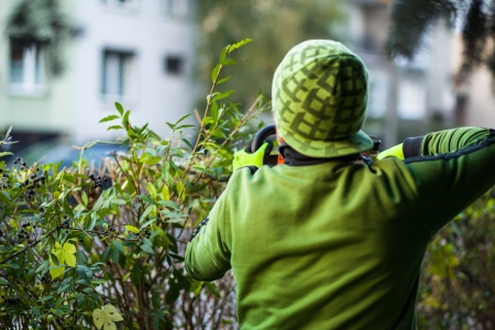 bush trimming: Cutting hedge with powertools