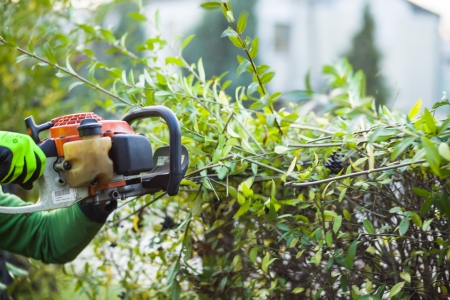 trimming: Cutting hedge with powertools