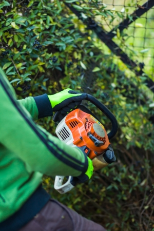 Cutting hedge with powertools Stock Photo - 24331531
