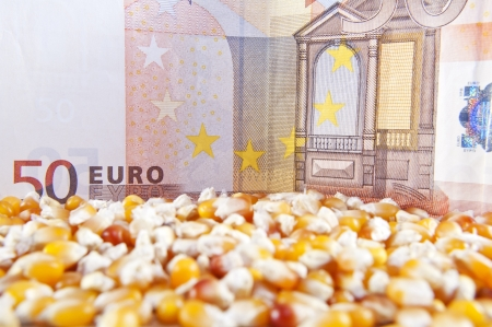 cash crop: Euro banknote and corn beans Stock Photo