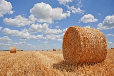 fardos: Campo cosechado con las balas de paja en verano Foto de archivo