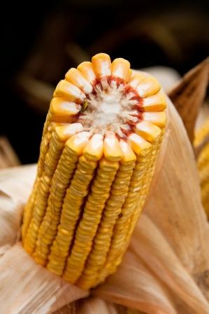 Beautiful yellow corn cob Stock Photo