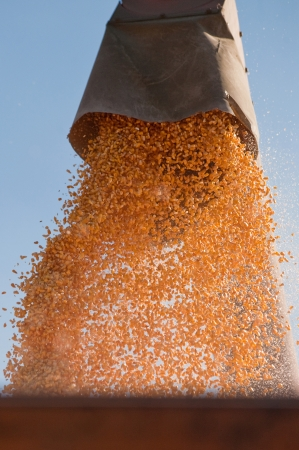 Close up image of corn harvesting machinery against blue sky