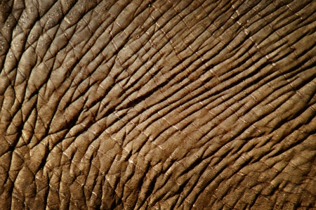 Elephant skin texture contrast close up Stock Photo