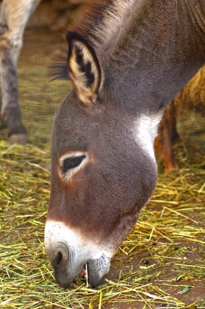 Donkey head photo