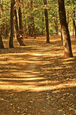 Pathway through the autumn park with fallen leaves