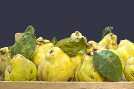 quinces: Fresh quinces in a crate Stock Photo