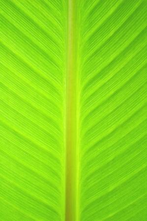 Leaf background texture Stock Photo