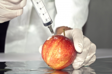 transgenic: Red apple in genetic engineering laboratory, gmo food concept
