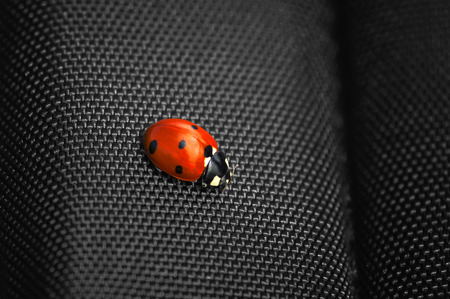 Ladybug isolated on black background  Soft focus  Stock Photo