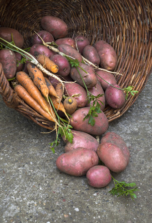 Basket of fresh tasty new potatoes with carrot  Stock Photo