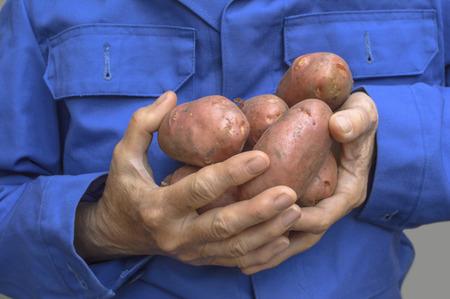 Female hands holding a potato
