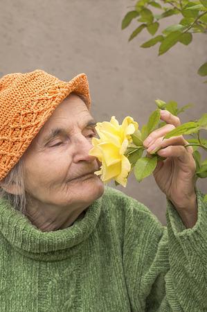 Elderly woman smelling yellow rose flower and enjoy.