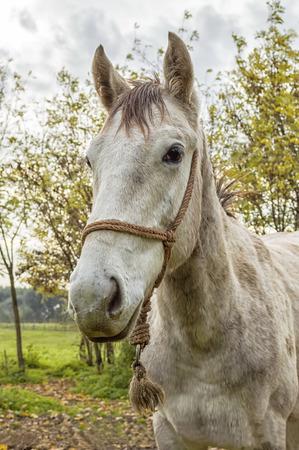 paddock: White horse waits in paddock Stock Photo