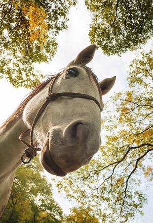Young funny horse looking at camera