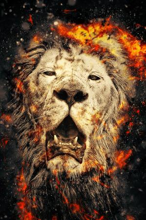 African lion, fire illustration