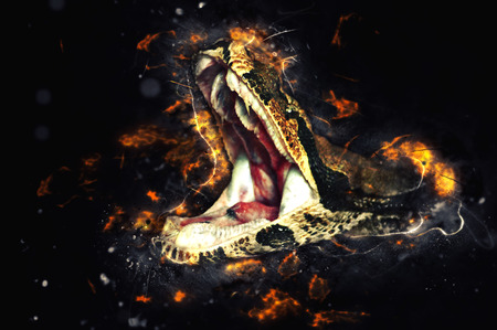 anaconda: Royal boa, opens mouth. Fire illustration