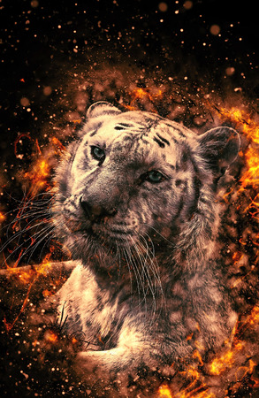 White Bengal tiger, , fire illustration