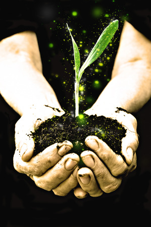 new plant: Farmer hand holding a fresh young plant with sparkle. Symbol of new life and environmental conservation. Stock Photo
