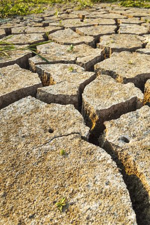barrenness: Dry soil texture on the ground. Selective focus.