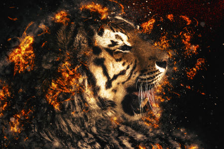 bengal fire: Beautiful Asian tiger, fire illustration Stock Photo