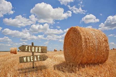 yellow agriculture: Flour or Wheat wooden direction sign in agricultural field. Stock Photo