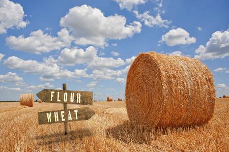 agricultura: Harina de trigo o de madera direcci�n signo en el campo agr�cola. Foto de archivo