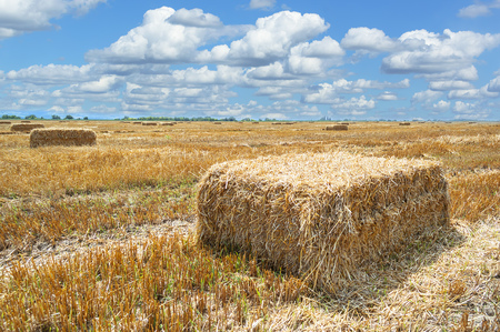 Straw bales in agricultural field.