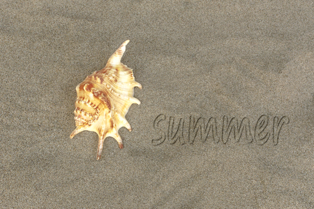 Written word summer on sand of beach with sea shell. Selective focus.