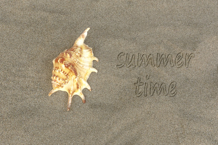 Written word summer time on sand of beach with sea shell. Selective focus. Stock Photo