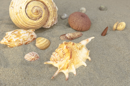Sea shells with sand as background. Summer beach. Selective focus. Stock Photo