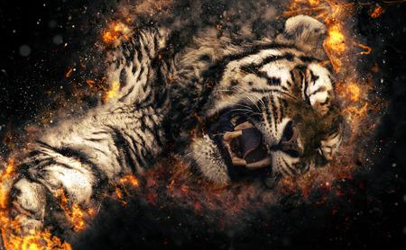 Asian tiger, fire illustration. Stock Photo