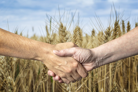 Farmers handshake over the wheat crop. Agricultural business. Stock Photo