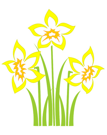 flora vector: Bunch of spring daffodils on a white background