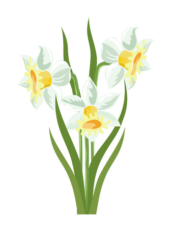 Bunch of spring daffodils on a white background
