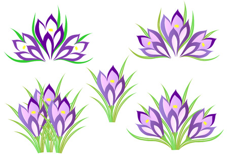 A set of spring crocuses for decoration Vector