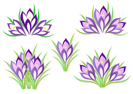 decoration: A set of spring crocuses for decoration