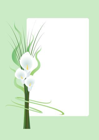 de lis: Tres Callas en el fondo verde